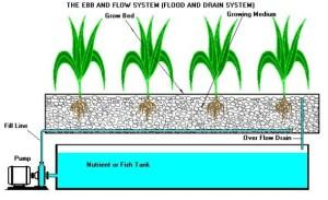 Aunque el proceso de instalación de un cultivo hidropónico es trabajoso, con una rutina rigurosa el mantenimiento de las plantas se convierte en un fácil.
