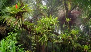 Las bromelias que se exhiben durante la excursión son conocidas por ser resistentes al sol. (Tomada: El Yunque)