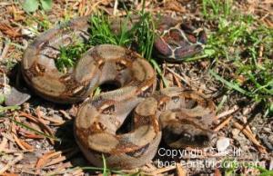 Foto tomada de www.boa-constrictors.com