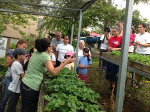 Fresas y Uvas Rose ofrece talleres educativos sobre plantas medicinales en Las Piedras. Tomado de http://fresasyuvasrose.weebly.com/