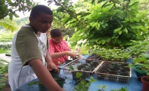 Una planta de fresas puede ser sembrada en un tiesto convencional sin necesidad de un espacio mayor.  Tomado de http://fresasyuvasrose.weebly.com/